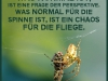 Was_normal_ist_wandel-spinne-fliege