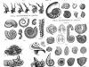 Vortex-in-lifeforms-2-grey-scale_Spiralen_Natur